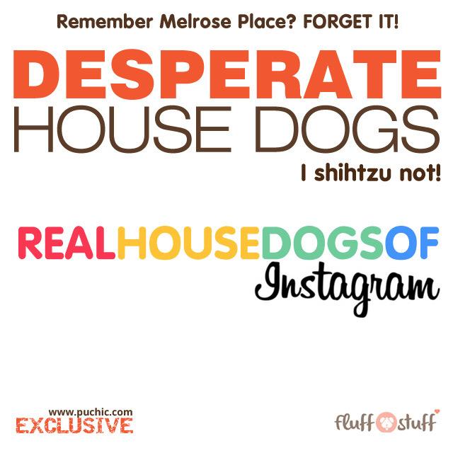 Desperate House Dogs - The Drama Dog Sitcom