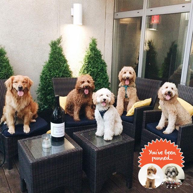 dog-meetings