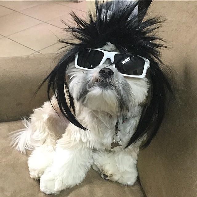 max-rockstar