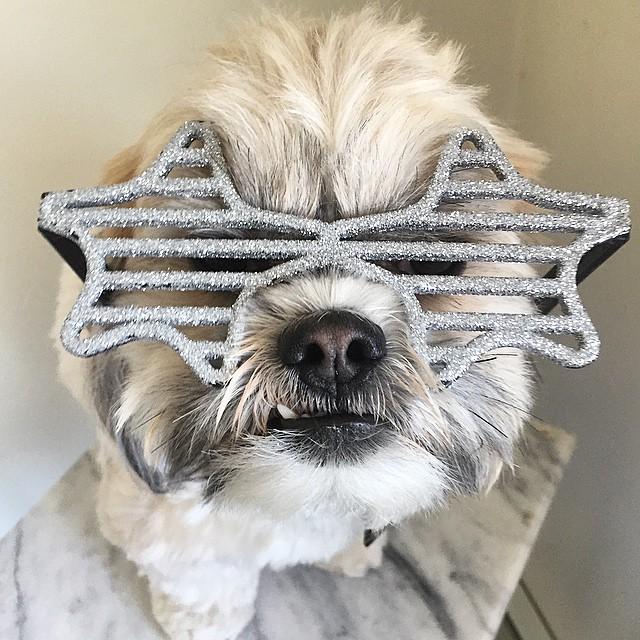 max-shades