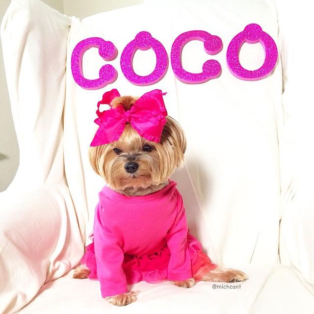 michcant-coco