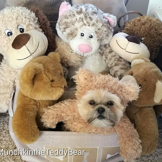 munchkintheteddybear-friends