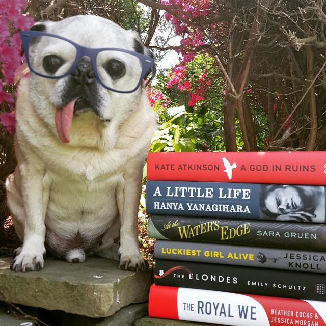 rocco-book-pug