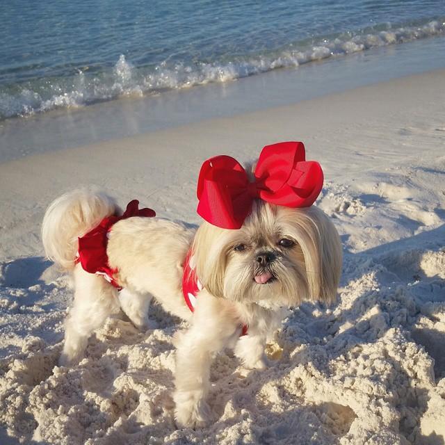 sparklesthediva-beach