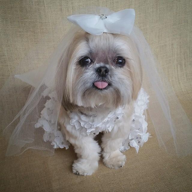 sparklesthediva-bride