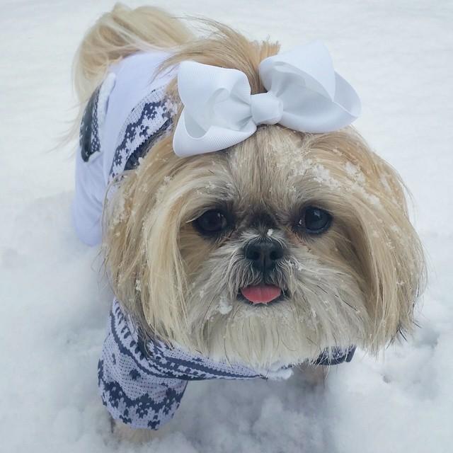 sparklesthediva-snow