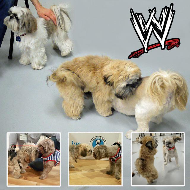 wrestling-match